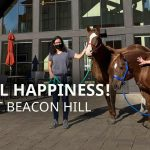 Horses Come to Visit at Beacon Hill